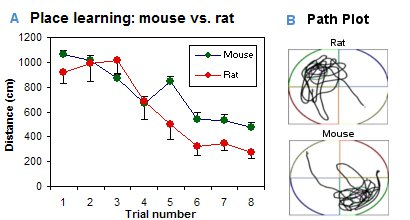 Place learning - mouse vs. rat
